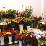 Blumen zum Verkauf im Geschäft
