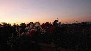 Blumen vor Abendhimmel