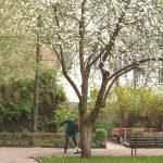 Wiese, Baum, Bänke, Mann fegt den Weg